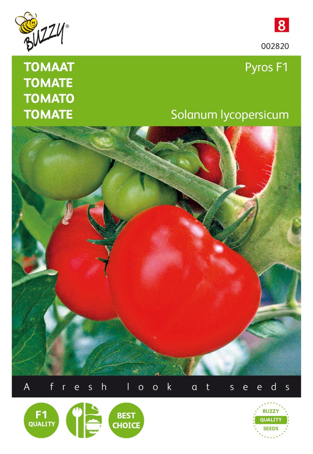 Solanum lycopersicum 'Pyros F1' plant