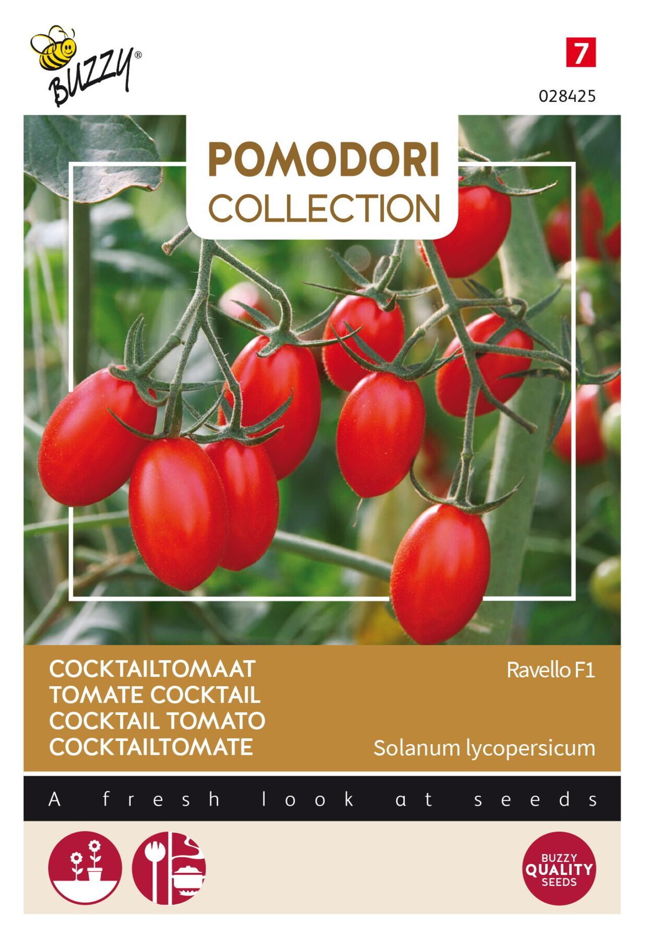 Solanum lycopersicum 'Ravello F1' plant