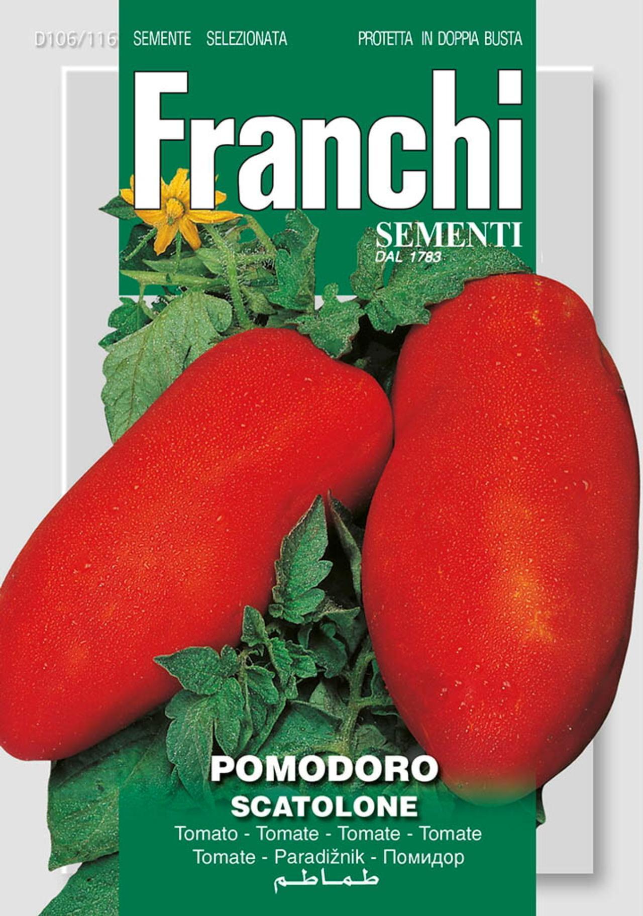 Solanum lycopersicum 'Scatolone' plant