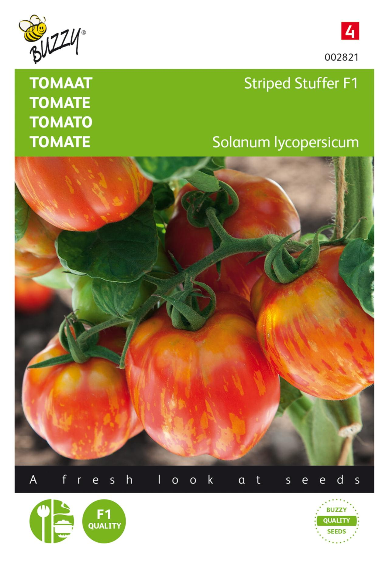 Solanum lycopersicum 'Striped Stuffer F1' plant