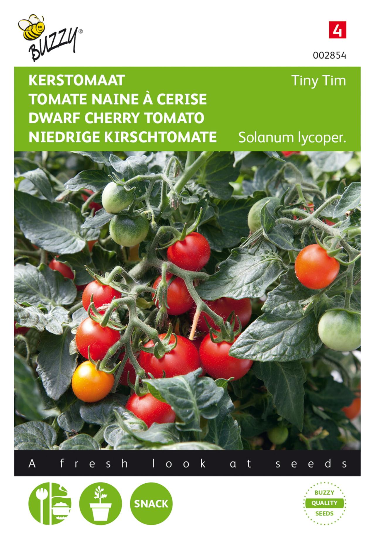 Solanum lycopersicum 'Tiny Tim' plant