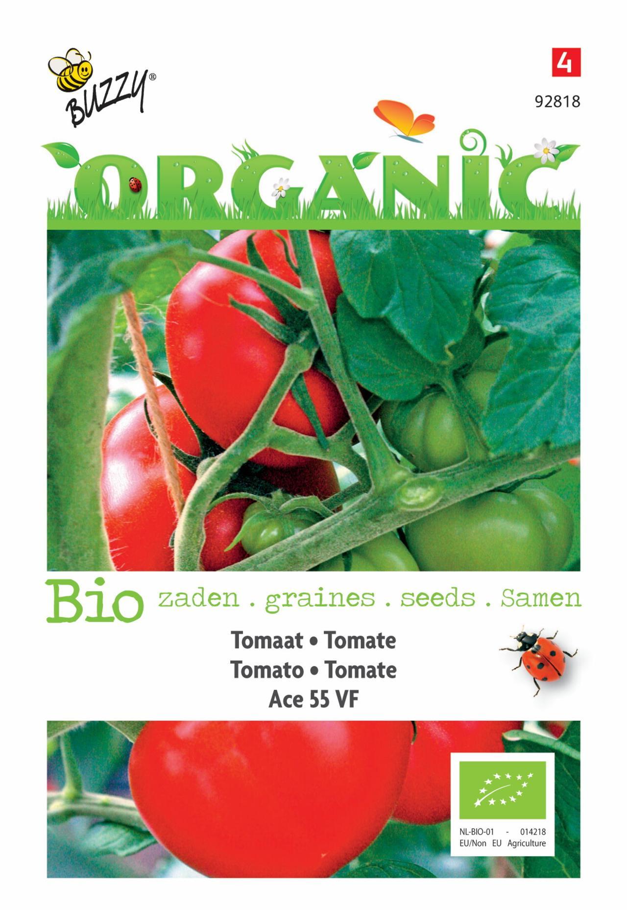 Solanum lycopersicum 'Tomaten Ace 55 VF' (BIO) plant