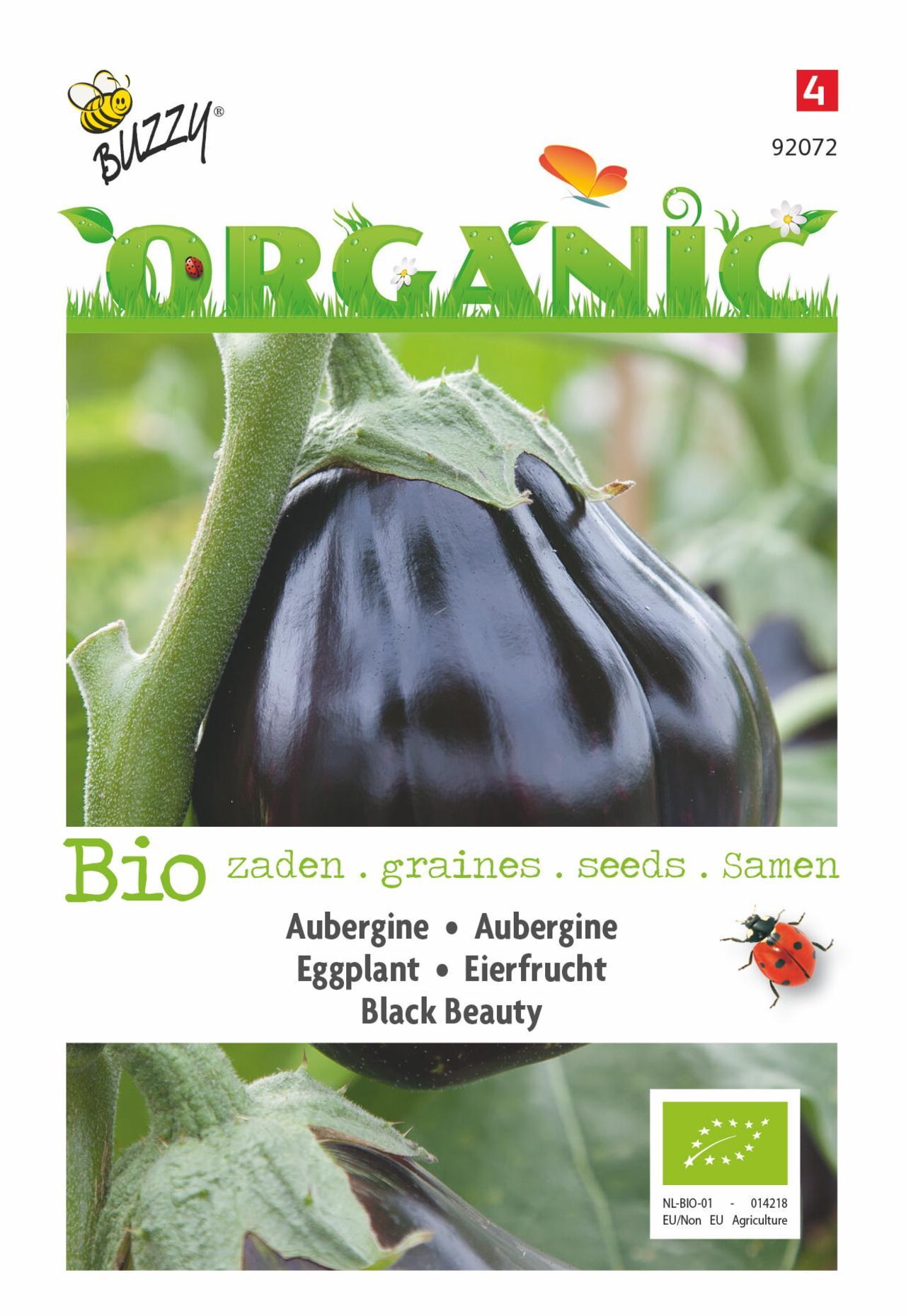 Solanum melongena 'Black Beauty' (BIO) plant