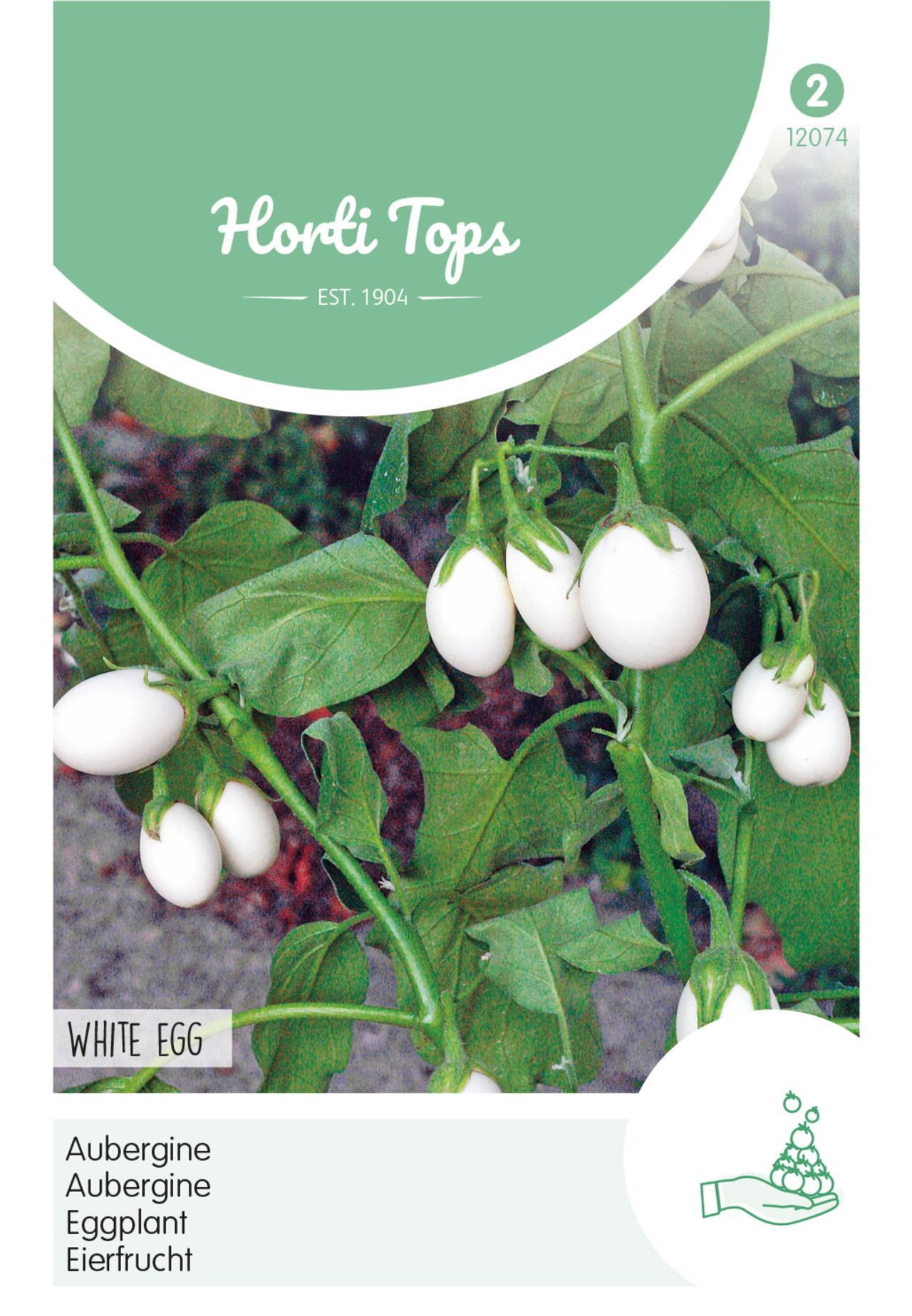 Solanum melongena 'White Eggs' plant