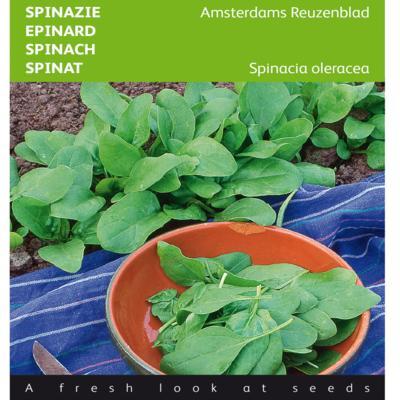 spinacia-oleracea-amsterdams-reuzenblad
