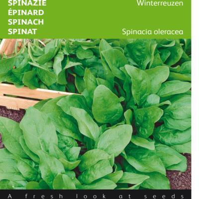 spinacia-oleracea-winterreuzen