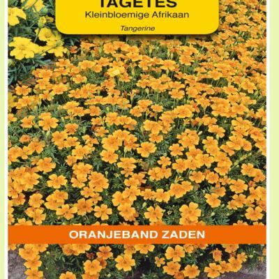 tagetes-tenuifolia-pumila-oranje