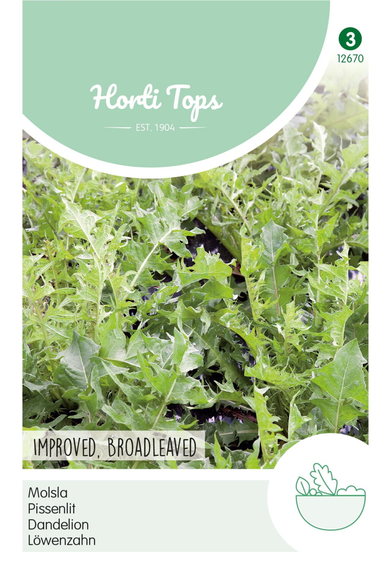 Taraxacum officinale 'Improved' plant