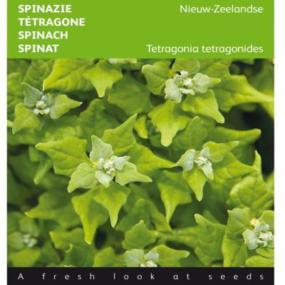 tetragonia-tetragonioides
