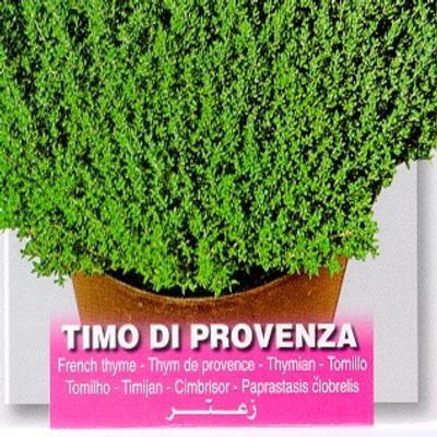 thymus-vulgaris-timo-di-provenza