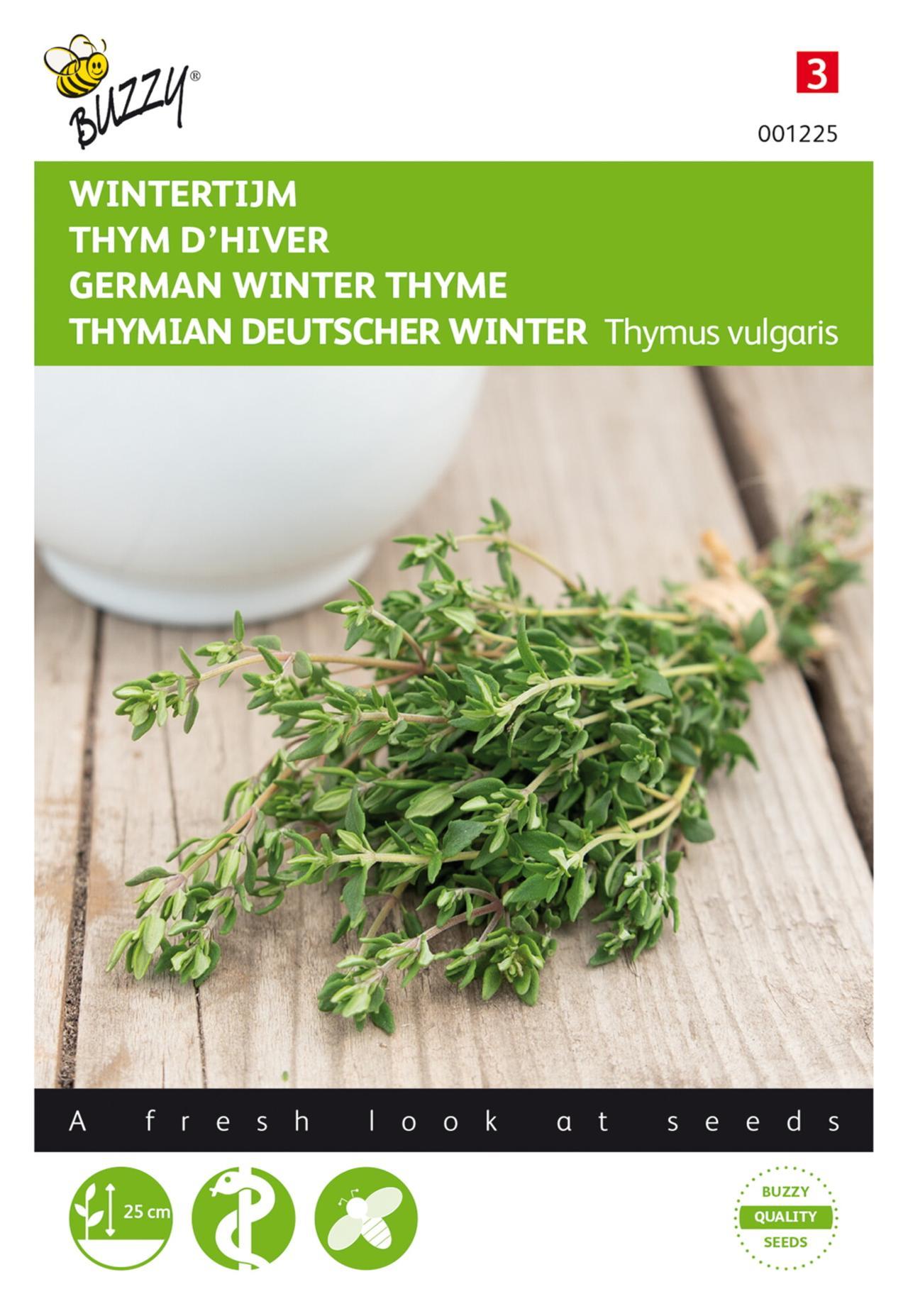 Thymus vulgaris plant