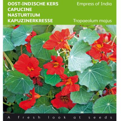tropaeolum-majus-empress-of-india