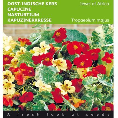 tropaeolum-majus-jewel-of-africa
