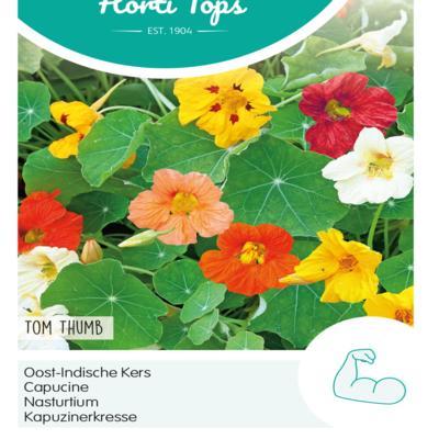 tropaeolum-majus-nanum-tom-thumb