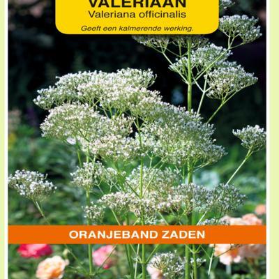valeriana-officinalis