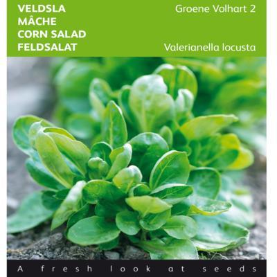 valerianella-locusta-groene-volhart-2