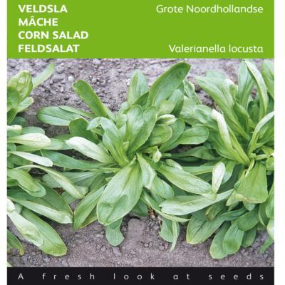 valerianella-locusta-grote-noordhollandse