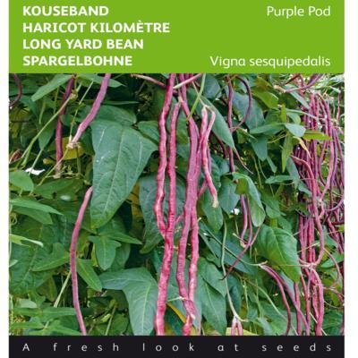 vigna-unguiculata-ssp-sesquipedalis-paars