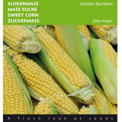 zea-mays-golden-bantam